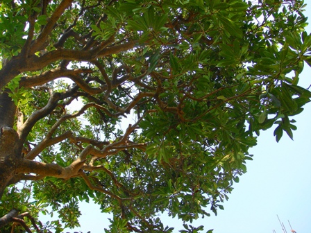 木の写真を加工 サイバーショット・cyber-shot DSC-T100で撮影